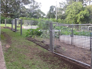 Vegie garden and fencing
